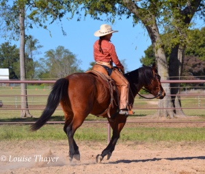 c and ally 2014 canter